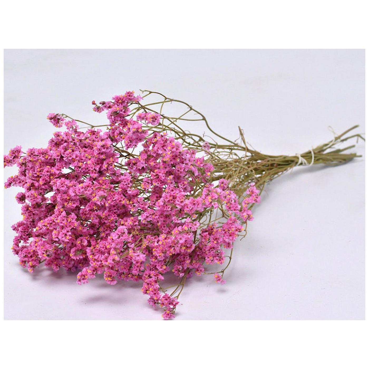 Limonium Pink