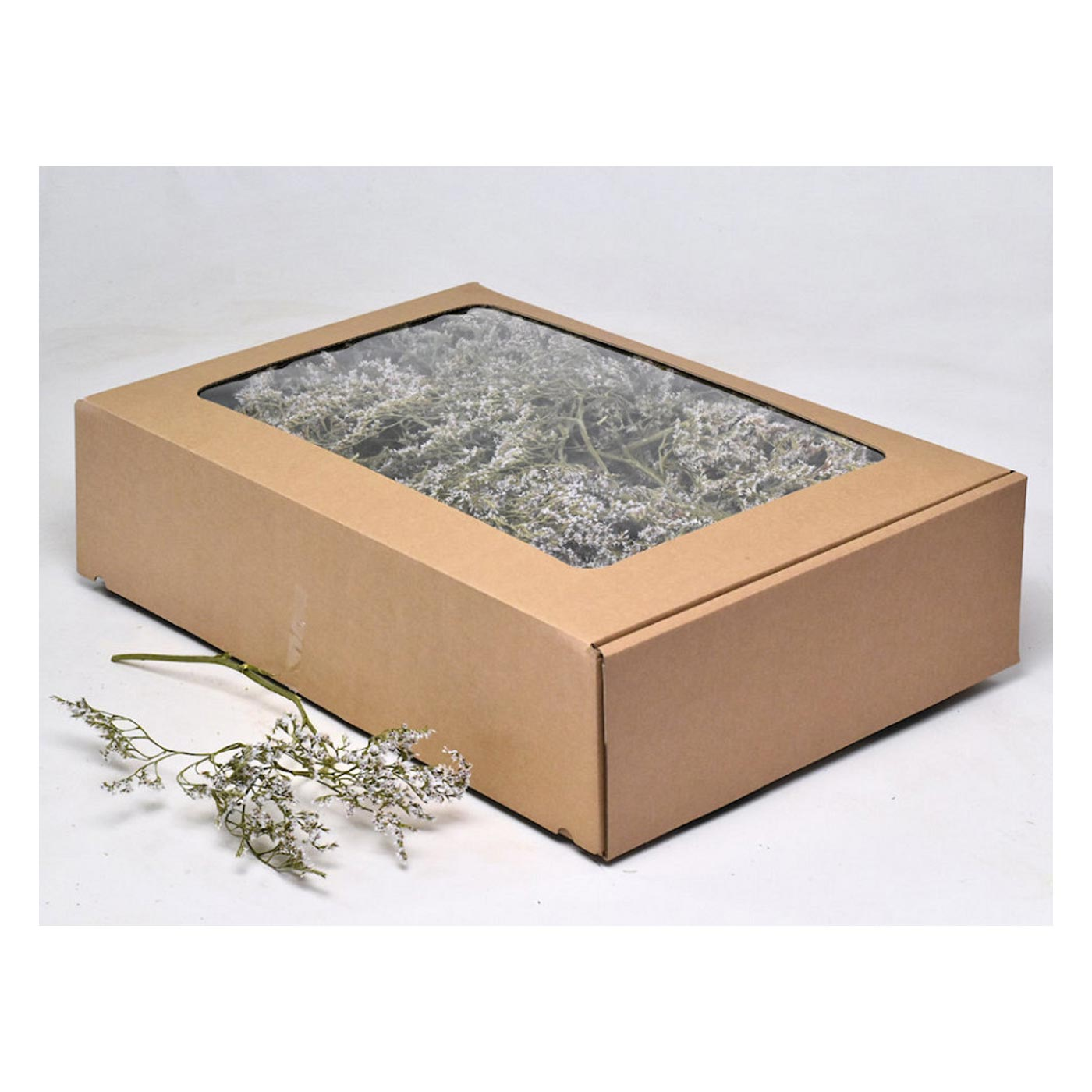 Statice Box