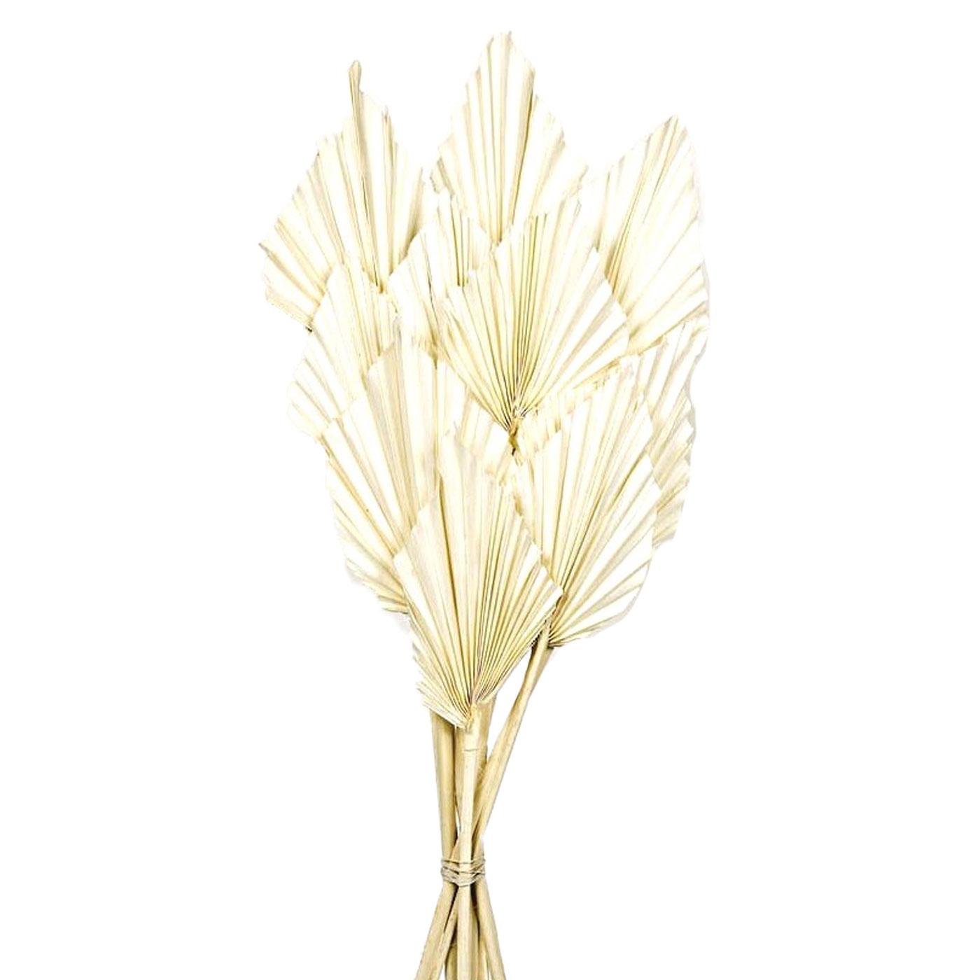 Palm Spears White